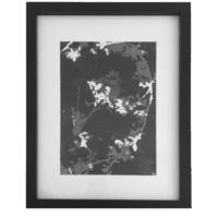 Original Unique Botanical Blossom Photogram Victoria Gray Design Essentials