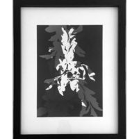 Original Unique Botanical Distorted Leaves Photogram Victoria Gray Design Essentials