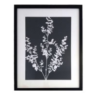 Original Unique Botanical Eucalyptus Large Photogram Victoria Gray Design Essentials