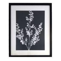 Original Unique Botanical Eucalyptus Large Photogram Victoria Gray Design Essentials