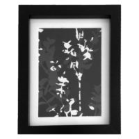 Original Unique Botanical Eucalyptus Overlay Photogram Victoria Gray Design Essentials