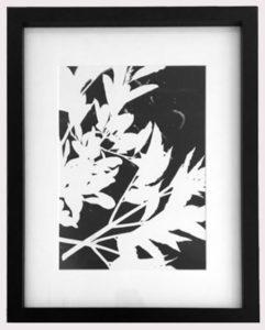 Original Unique Botanical Foliage Photogram Victoria Gray Design Essentials