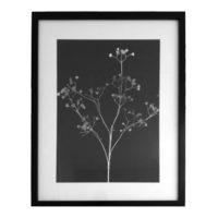 Original Unique Botanical Gypsophila Photogram Victoria Gray Design Essentials