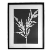 Original Unique Botanical Heather Photogram Victoria Gray Design Essentials