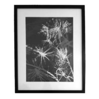 Original Unique Botanical Pine Overlay Photogram Victoria Gray Design Essentials