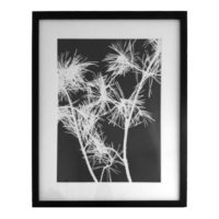 Original Unique Botanical Pine Photogram Victoria Gray Design Essentials