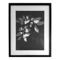 Original Unique Botanical Scattered Leaves Photogram Victoria Gray Design Essentials